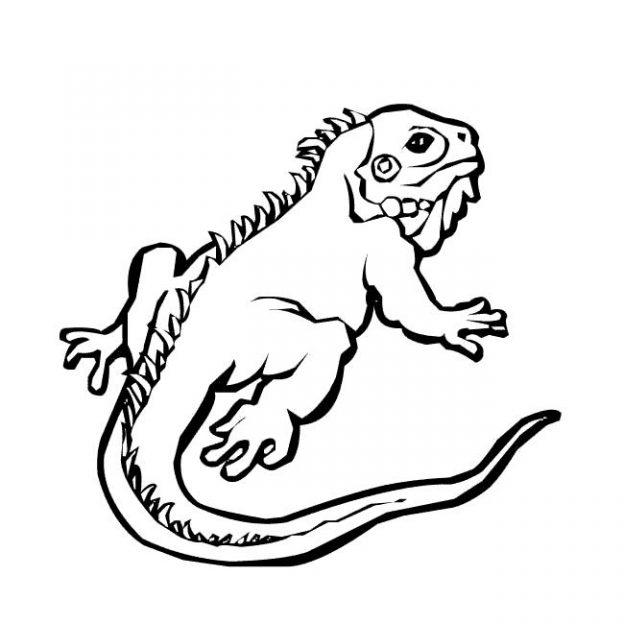 Dibujos Para Colorear De Animales Iguana